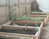 Appleby Edibles raised beds