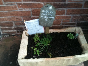 Herbs to pick and use at the United Reformed Church Penrith