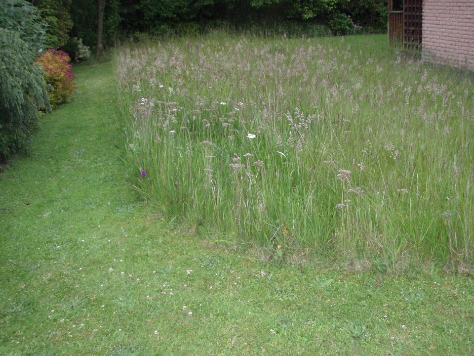 Long grass in Christine's lawn