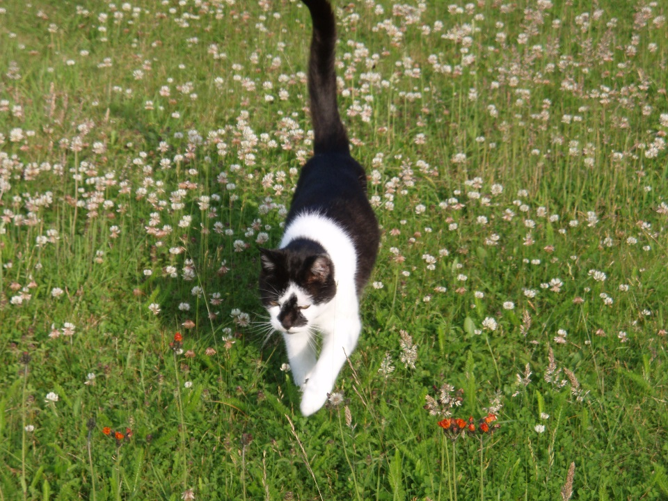 Cat in the long grass