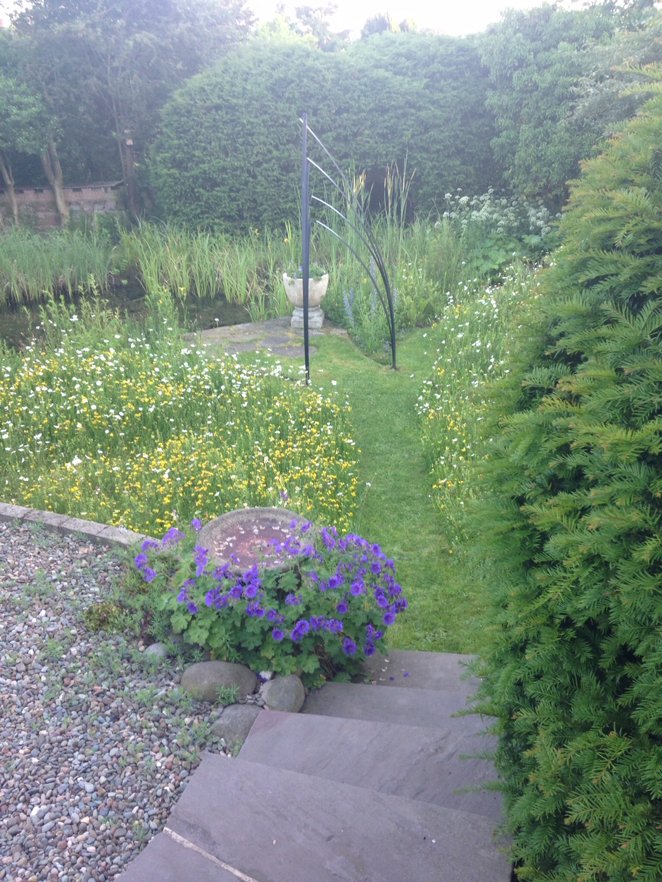 Maureen's lovely garden with wildflower lawn and pond